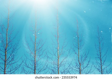 Spring winter landscape tree brunches on blue sky background with sun shine