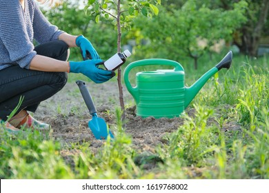 Spring work in the garden, bottle of chemical fertilizer, fungicide in hand of woman gardener. Processing and care of small fruit tree