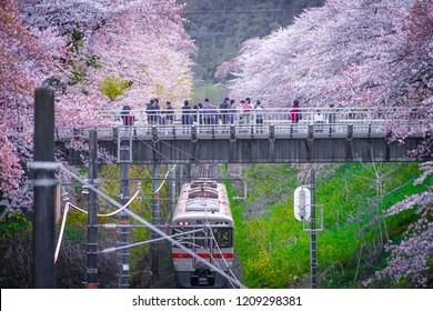 Spring Yamakita Station (Kanagawa ashigarakami district)