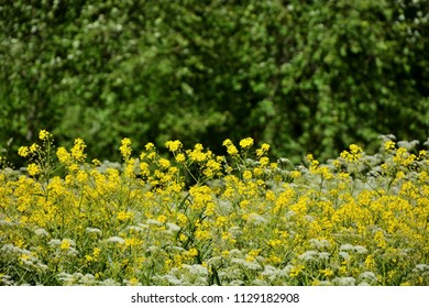 Spring yellow flowers as a background. Closeup view
