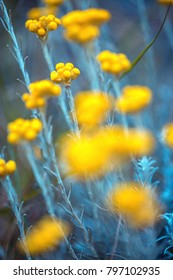 spring yellow flowers. Outdoor vintage photo with cold blue colors