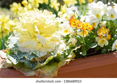spring yellow flowers planted together in garden container