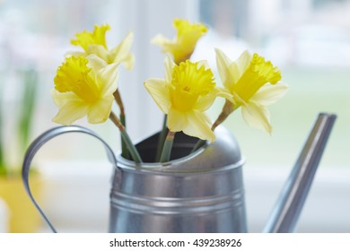 Spring yellow narcissus in a kitchen window. Low DOF