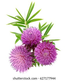 spring young thistle flower bouquet and bamboo foliage