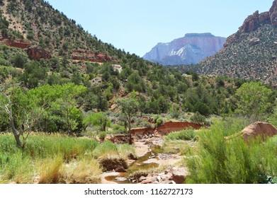 Springdale, Utah, USA on July 26, 2018 : Natural landscape in Zion national park.