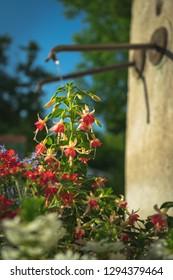 springlike Fountain with Flowers