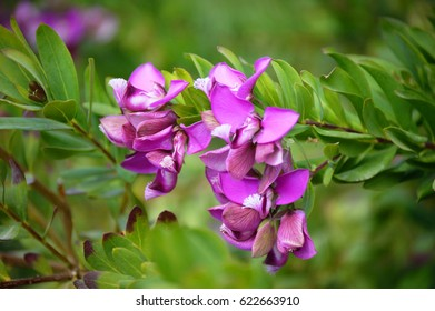 Spring's purple flowers in a green plant