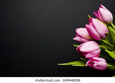 Springs tulips on black background with room for text and graphics and copy space