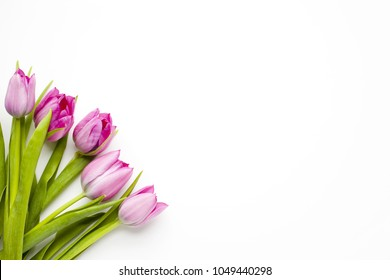 Springs tulips on white background with room for text and graphics