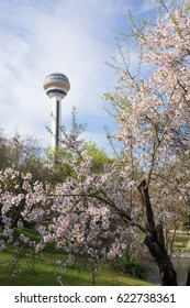 Springtime in Ankara, Turkey -The  Botanic Park with blossoming trees and Atakule a modern symbol of Ankara