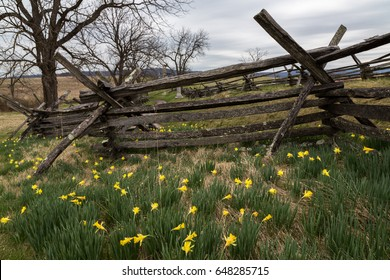 Springtime in Antietam at the Bloody Lane