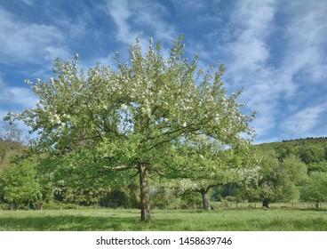 Springtime in Bergisches Land,North Rhine westphalia,Germany