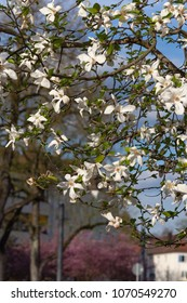 springtime blossom branch of tree on city facades in historical city of south germany happy holiday relaxing enjoy warm sunshine