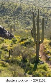 Spring-time Cactus Scene