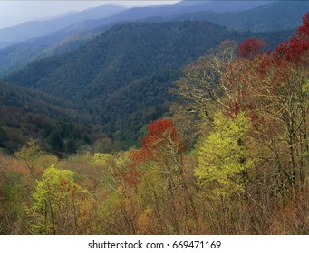 Springtime in the Cherokee National Forest, Great Smoky Mountains National Park, North Carolina