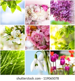 Springtime collage from nine photos of nature