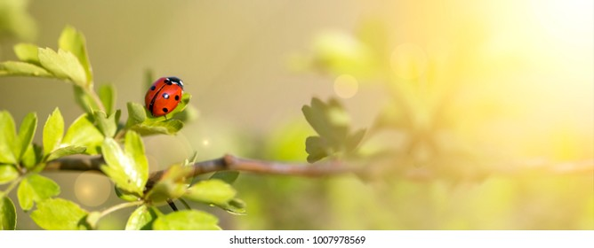 Springtime concept - web banner of a ladybird as sitting on a leaf