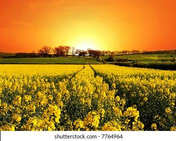 Springtime Dawns over Rural England