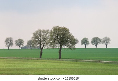 springtime field with trees