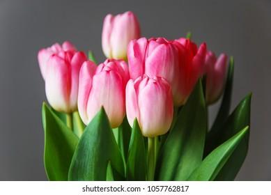 Springtime flowers - pink tulip boquet