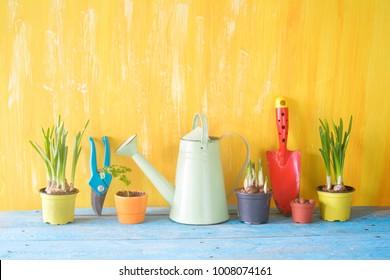 springtime gardening, young flowers, gardening utensils, good copy space