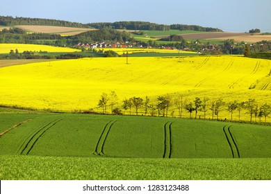 springtime landscape with golden flowering field of rapeseed, canola or colza in latin brassica napus and green field of cereal, rape seed is plant for green energy and green industry