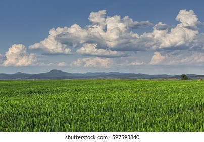 Springtime landscape with vast green wheatfield and stormy clouds.