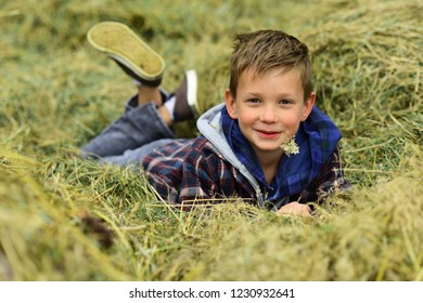 Springtime of life. Little boy enjoy springtime in countryside. Little boy relax lying in hay. Spring has returned.