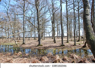 Springtime in the nature reserve by Ottenby on the swedish island Oland