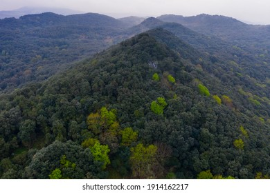 Springtime in oak holm forest in Liendo Valley within Eastern Coastal Mountain range in Cantabria Autonomous Community of Spain, Europe