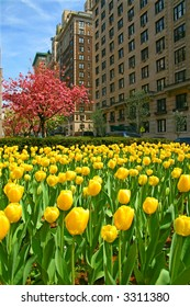 springtime on park avenue