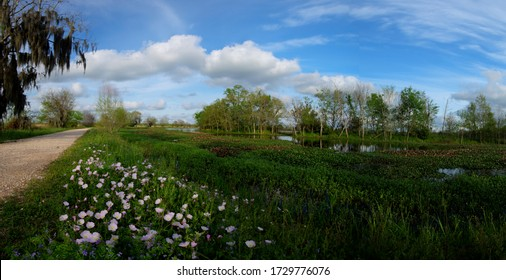 Springtime panorama of the 40 Acre Lake at Brazos Bend Park in Needville, Texas.