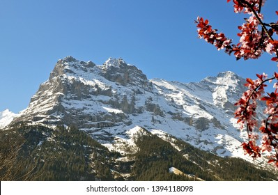 springtime in the swiss alps near Grindelwald