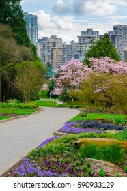 Springtime in Vancouver, British Columbia's Stanley Park, including sine of the city's famous cherry blossoms.