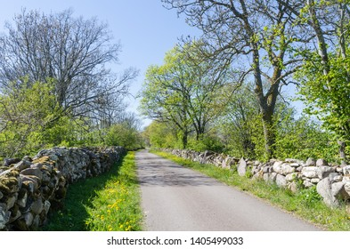 Springtime view of a beautiful country road surrounded with dry stonewalls in the swedish nature reserve Horns Kungsgard on the island Oland