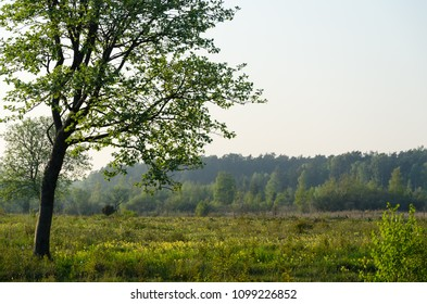 Springtime view from a beautiful grassland on the swedish island Oland