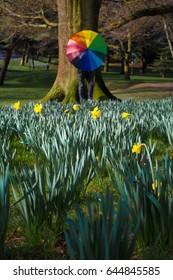 Springtime walks amongst the daffodils with the umbrella
