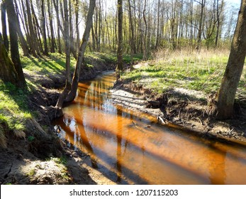 Springtime in young forest, Masuria, Poalnd