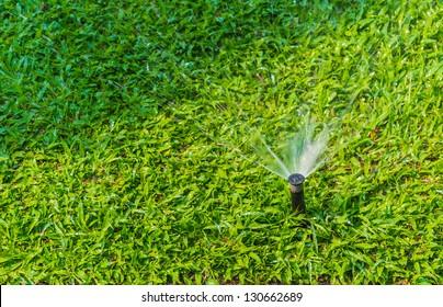 Sprinkle water