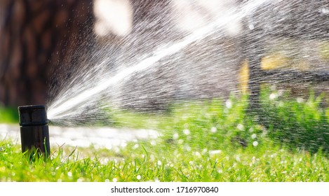 Sprinkler of automatic watering. Watering the lawn with an automatic irrigation system. Gardening.