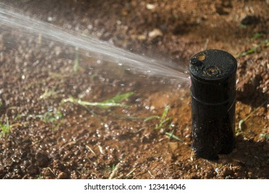 Sprinkler head dispersing water on grass under sunlight