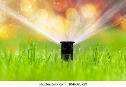 Sprinkler head watering green grass lawn. Gardening concept.