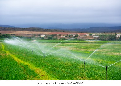 Sprinkler installation irrigating a field of maize in South Africa