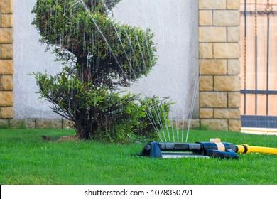 Sprinkler sprinkles water on the watering of backyard trees
