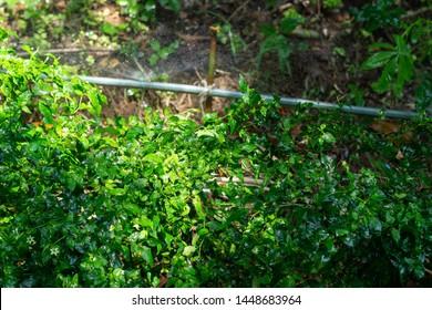 sprinkler Watering tree pepper plants