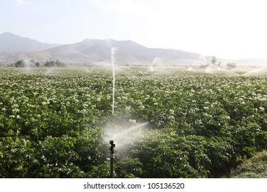 Sprinkler while Irrigating a field