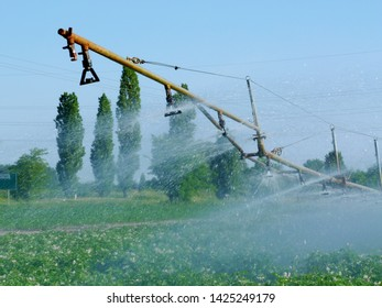 sprinklering potato field farmland on bright summer day. yellow water pipe and sprinkler head. waterdrops spreading over green field with white flowers. farming and food production concept. irrigation