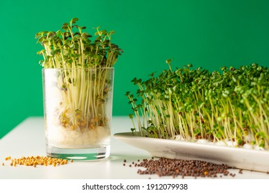 Sprouds, germinated seeds with green background  luminous white table and glass