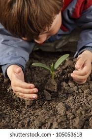 sprout in children hand