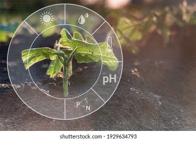 Sprout crop plant grow on field with cyber display of technological smart farming 4.0. Monitoring the growth of plants. Innovation and modern technology. - Shutterstock ID 1929634793